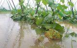 """Tin tức - Rau xanh ở Đà Nẵng """"đội giá"""" chóng mặt sau trận mưa ngập lịch sử"""