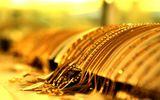 Tin tức - Giá vàng hôm nay 15/12/2018: Vàng SJC vụt tăng đến 80.000 đồng/lượng
