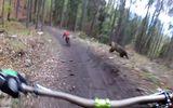 Tin tức - Video: Thót tim trước cảnh hai nam thanh niên bị gấu hoang dã rượt đuổi