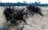 Thanh Hóa: Cận cảnh rừng phòng hộ bị đốn hạ để làm dự án du lịch