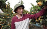Dám nghĩ dám làm, nông dân trẻ kiếm tiền tỷ từ vườn bonsai khổng lồ chơi Tết