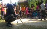 """Video: Gặp rắn hổ mang chúa """"thần"""", dân làng Ấn Độ quỳ xuống vái lạy"""