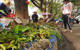 """Chợ lan rừng nhộn nhịp """"đón Tết"""", người dân đổ xô tận diệt loài hoa quý"""
