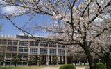 """Tạp chí Nhật hứng """"gạch đá"""" vì xếp hạng các trường đại học có nữ sinh """"dễ dãi"""" nhất"""