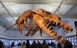 Phát hiện hoá thạch của quái vật thằn lằn chúa chuyên ăn cá voi ở Ai Cập