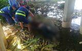 Cần thủ tá hỏa vứt câu bỏ chạy khi phát hiện thi thể cô gái nổi trên sông Sài Gòn