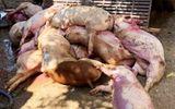 Kịp thời ngăn chặn 3,2 tấn thịt heo nhiễm bệnh chuẩn bị tuồn ra thị trường