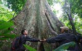 Tin tức - Giai thoại tình yêu trái ngang trong khu rừng nguyên sinh ở Tây Nguyên