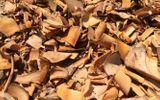 Sức khoẻ - Làm đẹp - Dùng rễ Bồ quân khắc phục chứng tiểu khó, tiểu rắt do phì đại tuyến tiền liệt ở người cao tuổi