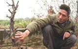Tin tức - Thông tin bất ngờ đằng sau vụ chủ vườn tự sát sau khi hàng trăm gốc đào Tết bị chặt phá
