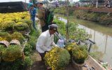 Sa Đéc: Hoa Tết tăng giá, người trồng phấn khởi vì trúng đậm