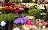 Mua hoa tươi dịp Tết: Cẩn trọng