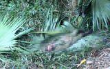 Hà Tĩnh: Người đàn ông  chết trong rừng ngày mùng 3 Tết nghi bị voi quật