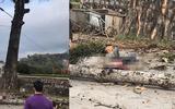 Hà Giang: Nam thanh niên tử vong do cành cây gạo rơi trúng đầu