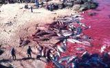 Nhật Bản: Hé lộ sự thật cảnh tàn sát cá heo khủng khiếp đang bị lên án mạnh mẽ