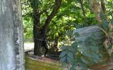 An ninh - Hình sự - Đi chăn trâu, tá hỏa phát hiện thi thể treo trên cây đang phân hủy nặng