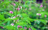 Cần biết - Tổng hợp các vị thuốc thảo dược trị đau khớp hiệu quả