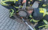 """Hài hước: """"Điều động gấp"""" đội cứu hỏa để giải thoát chú chuột béo ú mắc kẹt"""