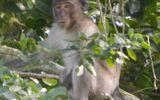 Tin tức thời sự 24h mới nhất ngày 3/3/2019: Bắn hạ khỉ cắn rách bắp chân trẻ 6 tuổi ở Sóc Trăng
