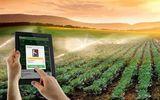 Người dân Trung Quốc đua nhau đăng ký trồng cây qua mạng Internet