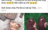 Xử lý nghiêm hành vi tung tin đồn thất thiệt về dịch tả lợn châu Phi