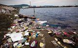 Đời sống - Động vật biển chết hàng loạt do nuốt phải rác thải nhựa