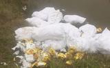 An ninh - Hình sự - Vụ hơn 700kg ma túy đá bỏ bên đường ở Nghệ An: Các nghi phạm khai gì?