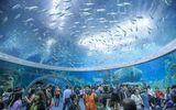 Mãn nhãn thủy cung lớn nhất thế giới đạt năm kỉ lục Guiness