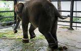 """Tận mục vườn thú """"tra tấn"""" động vật tồi tệ nhất thế giới"""
