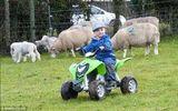 Cậu bé chăn cừu nhỏ tuổi nhất nước Anh siêu dễ thương