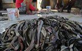 """""""Đột nhập"""" lò giết mổ rắn lấy da làm túi xách, giày dép"""