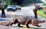 Cá sấu hỗ trợ cảnh sát bắt tên trộm ô tô