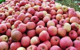 Hoa quả TQ nhiễm độc cao gấp 2-3 lần quy định vẫn... an toàn?