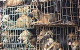 Video: Truyền hình Anh làm phóng sự về nạn trộm chó ở Việt Nam
