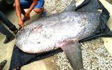 Trao tặng cá mặt trăng 120kg cho Bảo tàng Thiên nhiên Việt Nam