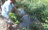 Cái chết bất thường của bé gái 2 tuổi dưới mương nước