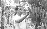 Kiếm hàng trăm triệu mỗi năm nhờ trồng chuối và nuôi rắn