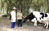 Tháng 1/2015, Vinamilk thu mua sữa bò tươi tăng gần 22%