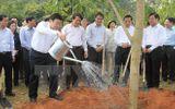 Chủ tịch nước phát động Tết trồng cây 2015