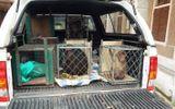 VQG Phong Nha – Kẻ Bàng tiếp nhận 6 cá thể động vật quý hiếm
