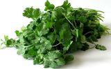 Lợi ích sức khỏe của rau mùi ít người biết đến