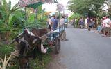 Định tội cho con ngựa kéo xe gây tai nạn chết người ở Tiền Giang