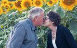 Tự tay trồng cả cánh đồng hoa hướng dương để tưởng nhớ vợ