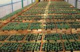 Chính sách mới - Phạt tới 100 triệu đồng với vi phạm về giống cây trồng, bảo vệ thực vật