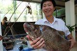 Ẩm thực - Cận cảnh loài cá có giá 1 chỉ vàng/1 kg tại Hà Nội