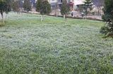 Sự kiện hàng ngày - Sa Pa ngập trong sương muối, băng giá
