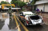 Tin trong nước - Hà Nội: Cây đổ la liệt đè bẹp dúm nhiều xe ô tô
