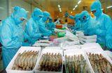 """Thị trường - Xuất khẩu thủy sản sang Trung Quốc: Thị trường 20 tỷ đô có """"dễ ăn""""?"""