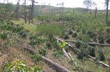 Tin trong nước - Phó Thủ tướng yêu cầu khẩn trương điều tra vụ 3 bảo vệ rừng bị bắn chết