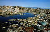 Chính sách mới - Đổ chất thải nguy hại xuống vùng biển Việt Nam bị phạt 1 tỷ đồng